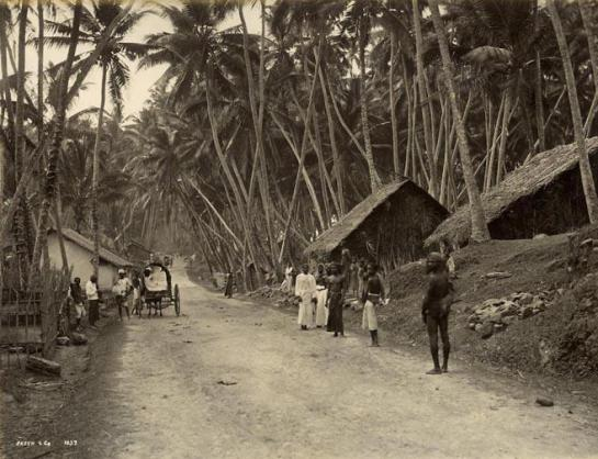 Edward Harper would have travelled down Galle  Road Colombo in Ceylon - this picture was taken in the 1900s.